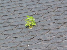 plant in roof